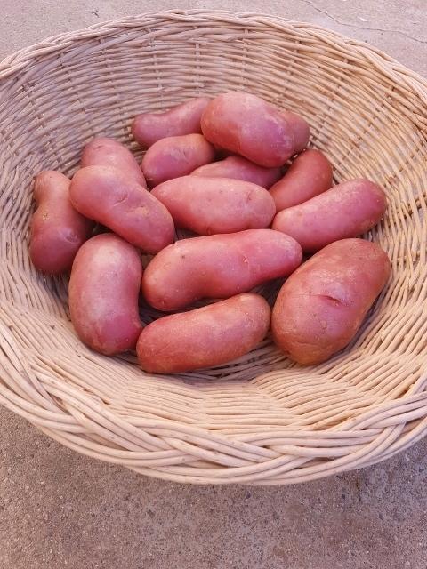 """Pomme de terre """"CHERIE"""" - à chair ferme - peau rouge"""