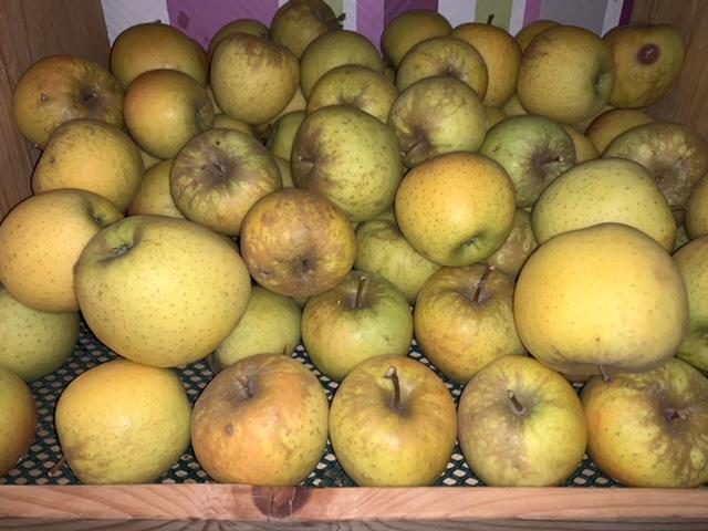 Pomme Goldor 500g