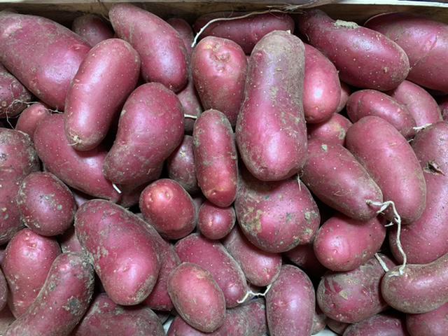 """Pomme de terre ferme """"Chayenne"""" BIO 500g"""