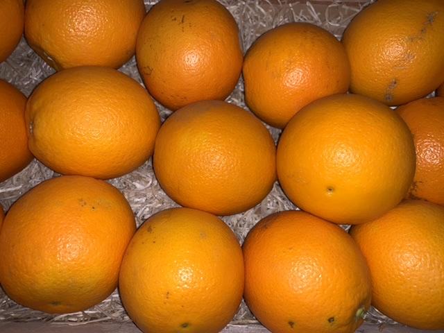 Orange de Table pce