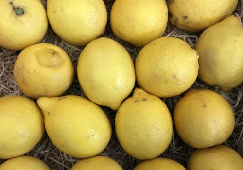 Citron jaune pce