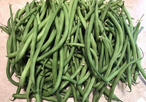 Haricots verts cueillis mains 500g
