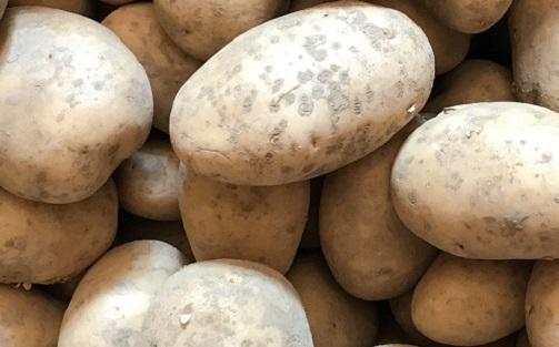 """Pomme de terre tendre """"Agata"""" 1kg"""