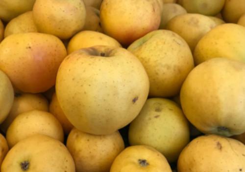 Pomme Belchard 500g