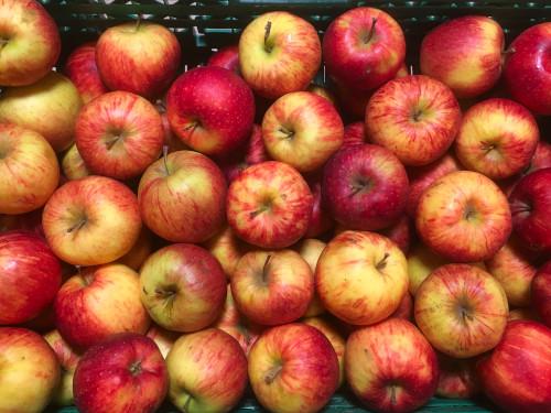 Pomme Jonagored 1 kg