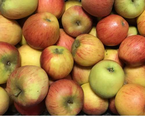 Pomme Reine des Reinettes 500g