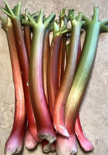 Rhubarbe Bio 1 kg