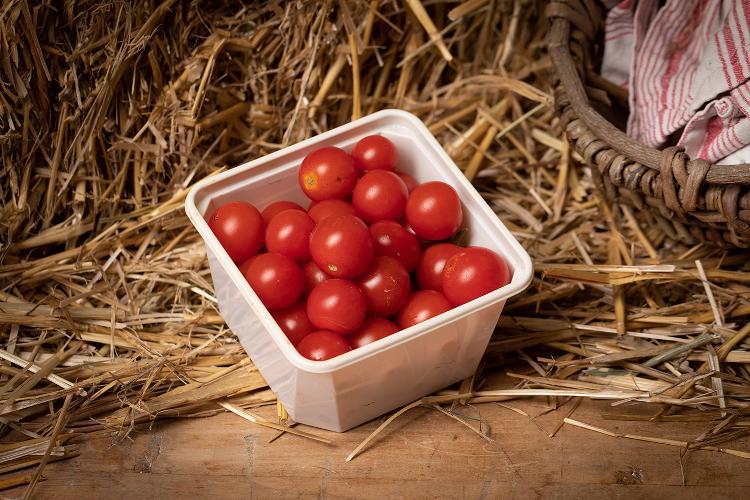 Tomates cerise du Jardin des Saveurs
