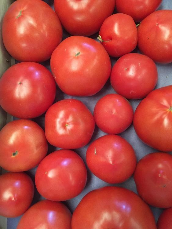 Tomates à coulis de l'EARL de NOUERE