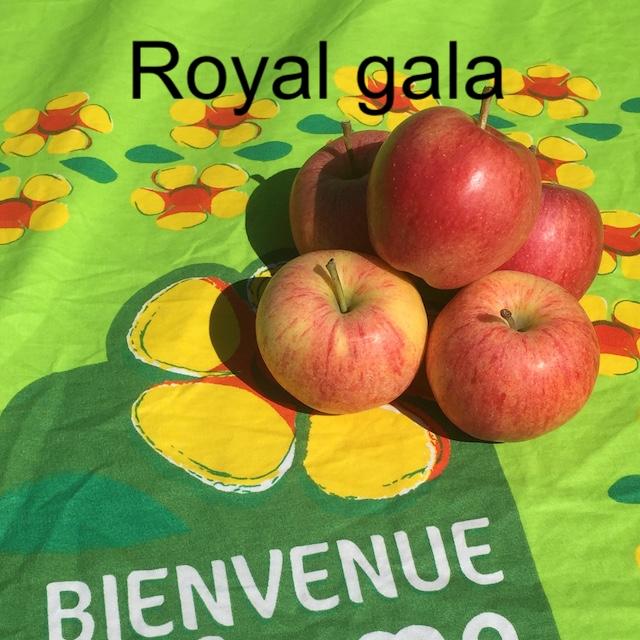 Pommes GALA 2 Kg