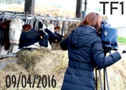La ferme Péard au JT du 13h de TF1