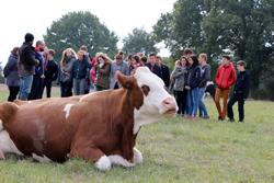 Le collège Saint Joseph de Savenay visite la ferme