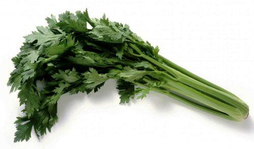 Celeri branche pour condiment