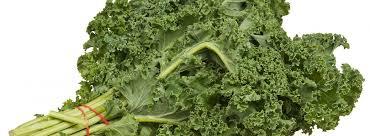 Chou Kale  vert botte