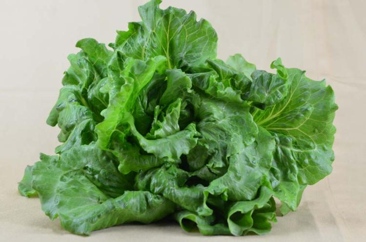 Salade Batavia rouge ou verte selon maturité  1 Pièce
