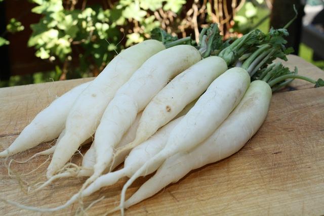 """Radis """"d'hivers"""" (Blancs/verts et longs, peuvent être un peu piquants) Environ 300 g"""