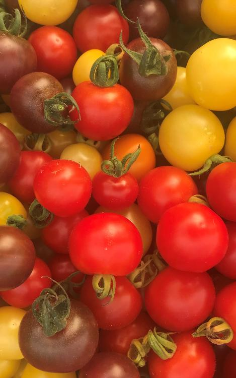 Tomates cerise Beuzec