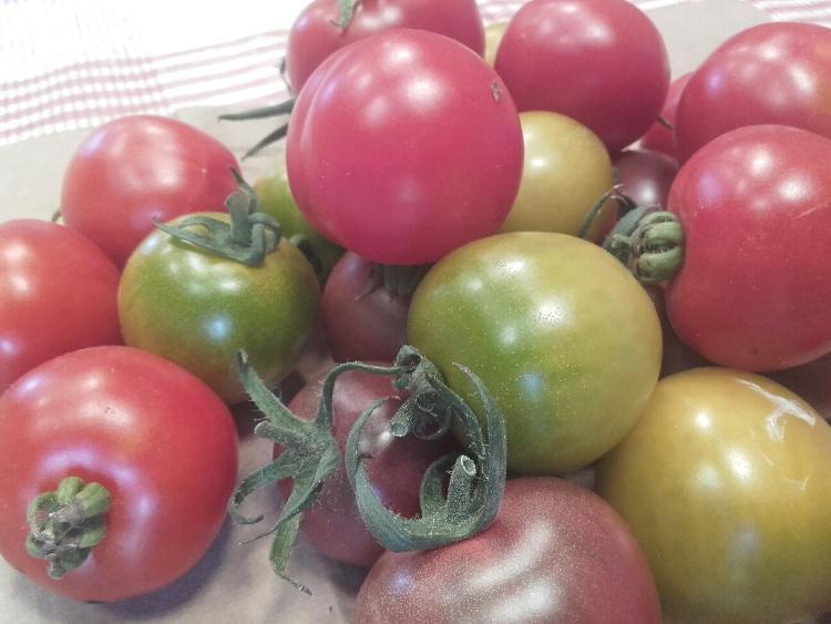 Tomates cocktail (Potager de Sophie)
