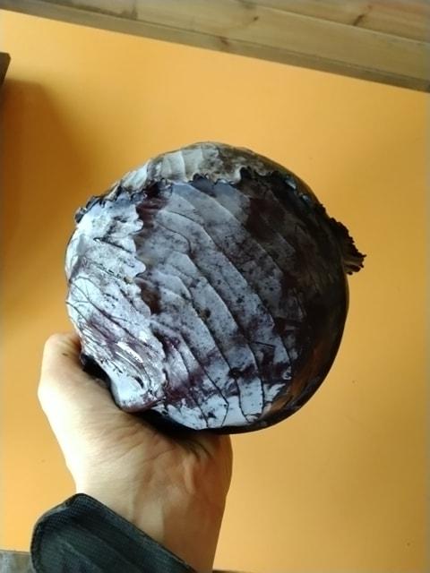 Chou rouge 2 kg  (Doudoutière)