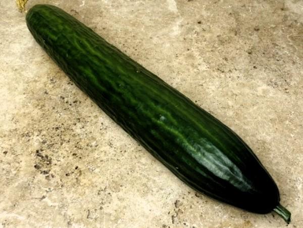 Concombre long (Potager de Sophie)