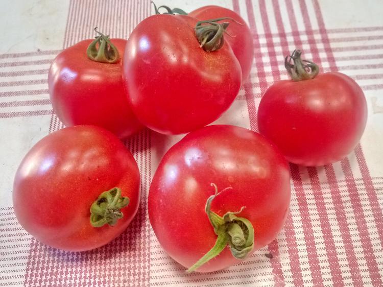 """Tomates """"classiques"""" rondes rouges (Potager de Sophie)"""