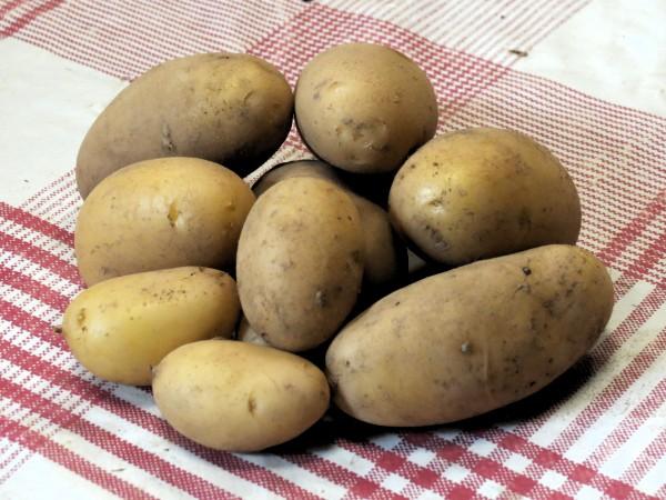 Pommes de terre (Potager de Sophie)