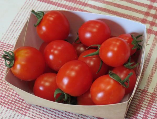 Tomates cerise (Potager de Sophie)