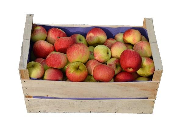 Caisse de Pommes 14kg