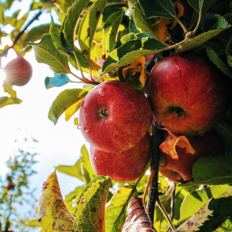 Sachet Pommes