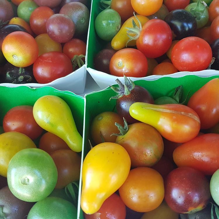 Barquettes de Tomates cerises Bio les Jardins de Léo