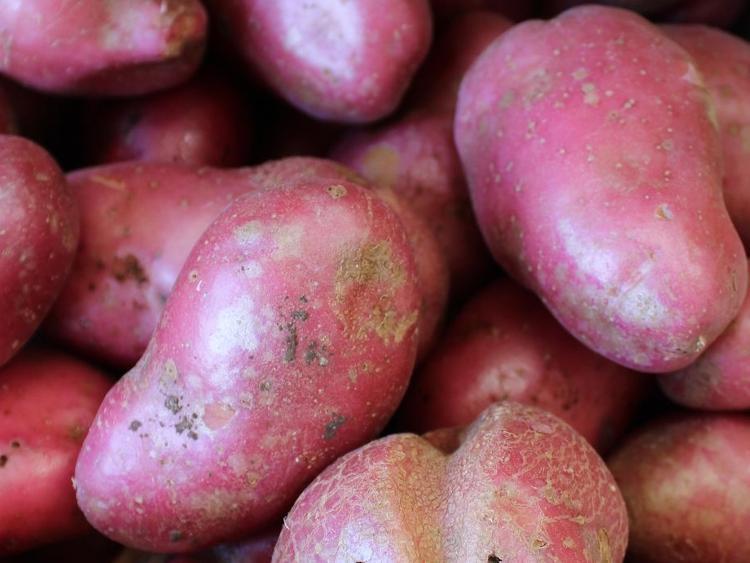 Pomme de terre conservation chair tendre