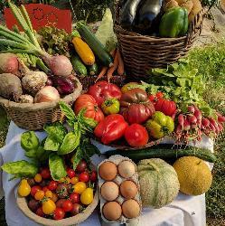 Où trouver nos légumes et fruits ?