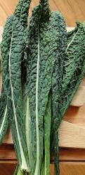 chou kale- nero di Toscana