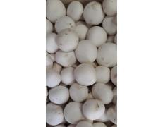 Champignons de Paris blancs 0.5 kg