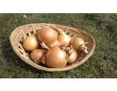 Oignons Jaunes -1kg