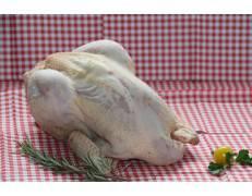 Poule prête à cuire 1.000 kg mini