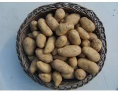 Pommes de terre Amandine 1 kg