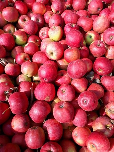 Mélange de pommes