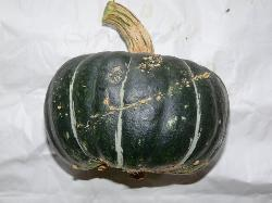 Courge Buttercup.