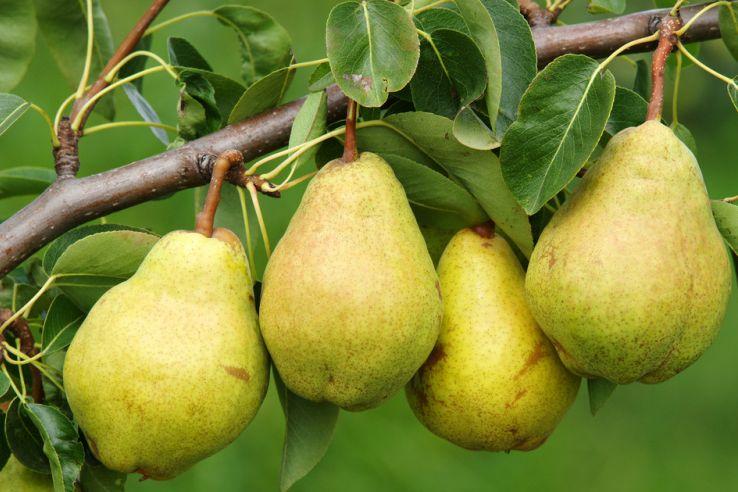 Purée Pommes Poires