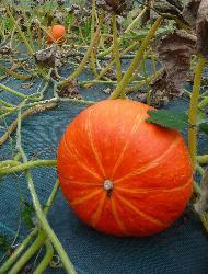 Confiture Potimarron aux 3 agrumes 350g.