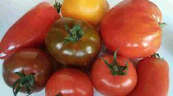 Tomate Ancienne en mélange