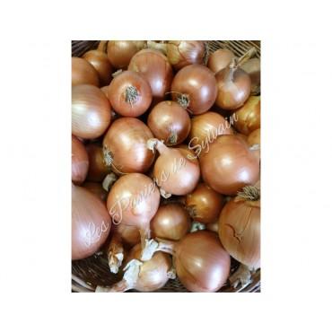 Oignon doux - Agriculture biologique