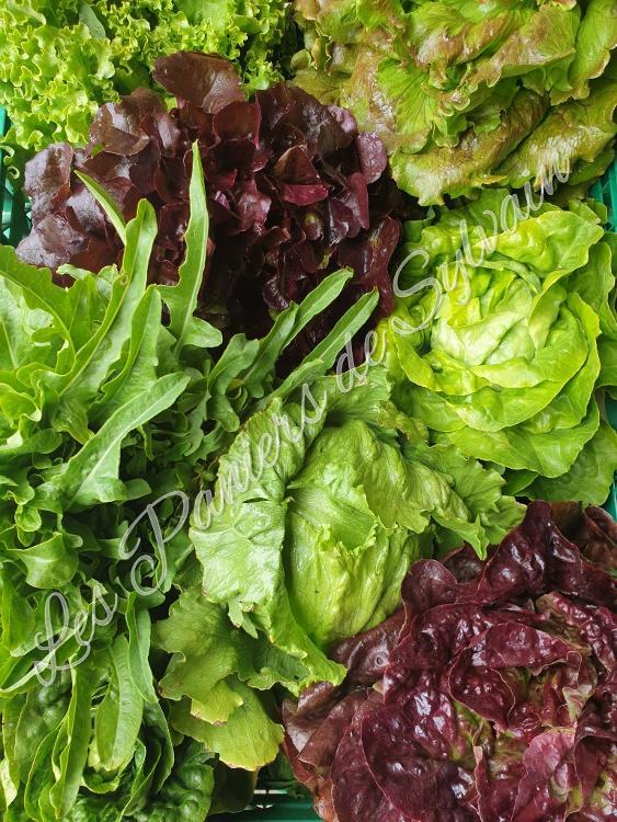 Lot 3 salades - Agriculture biologique
