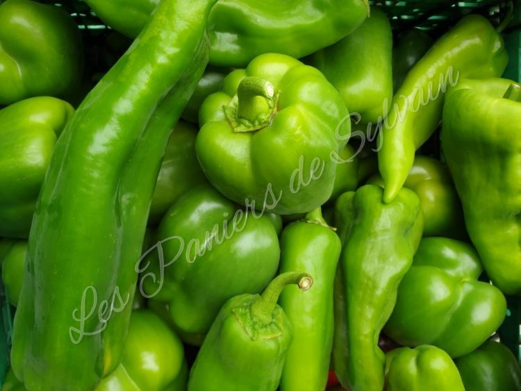 Poivron vert - Agriculture Biologique