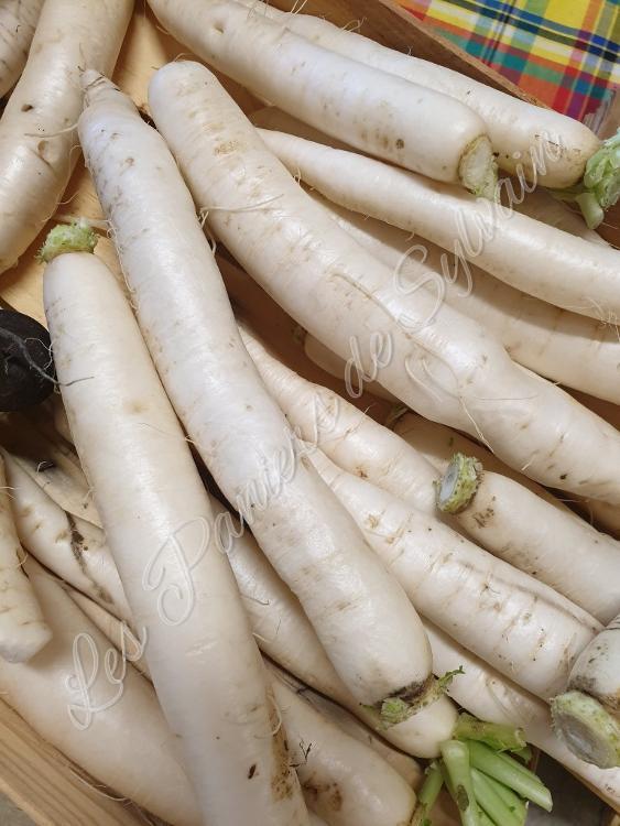 Radis blanc d'hiver - Agriculture Biologique