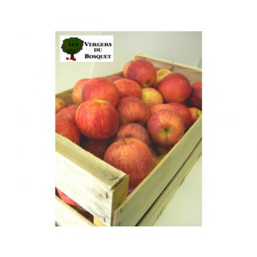 Pomme Gala colis 13 kg