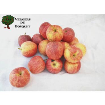 Pomme Gala colis 2 kg
