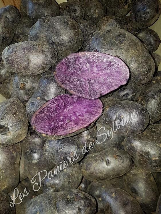 Pommes de terre violette - Agriculture Biologique