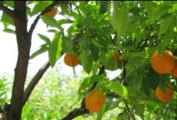 Givrés d'oranges : Voyage en Sicile